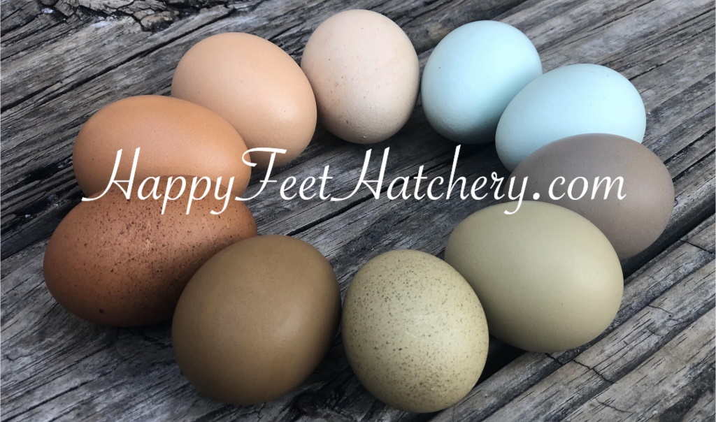 Happy Feet Hatchery Egg Colors