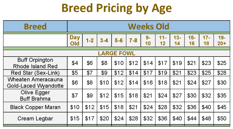 Breed pricing By Age