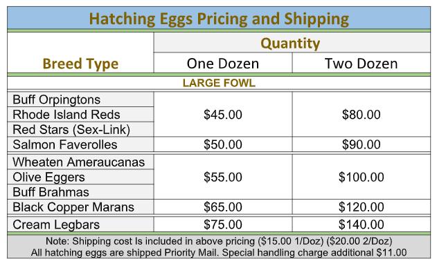Hatching Egg Shipping